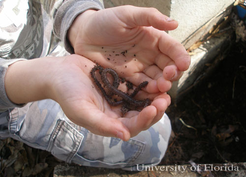Figure 10. Earthworms are beneficial and their activity is encouraged by most gardeners.