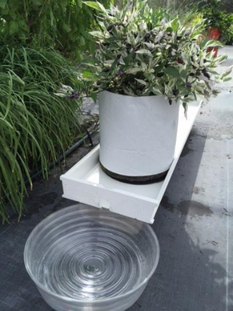 Figure 6.Upright bag container with gutter and houseplant drain dish catchment.