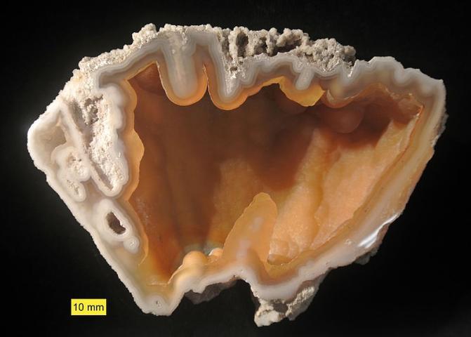 Figure 13.Agatized coral.