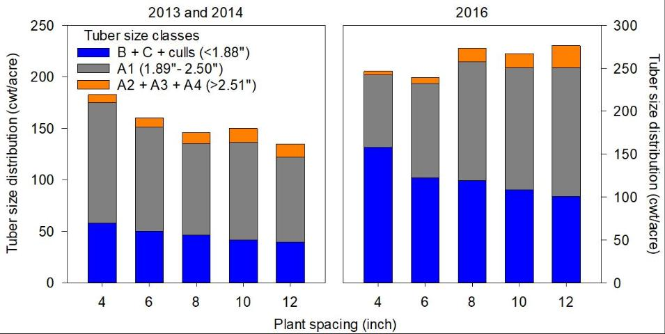 Figure 1.Tuber size distribution potatoes planted at 4, 6, 8, 10, and 12 inches in-row seed piece spacing in the spring of 2013, 2014, and 2016. Note: all trials were conducted using a 40-inch distance between rows.