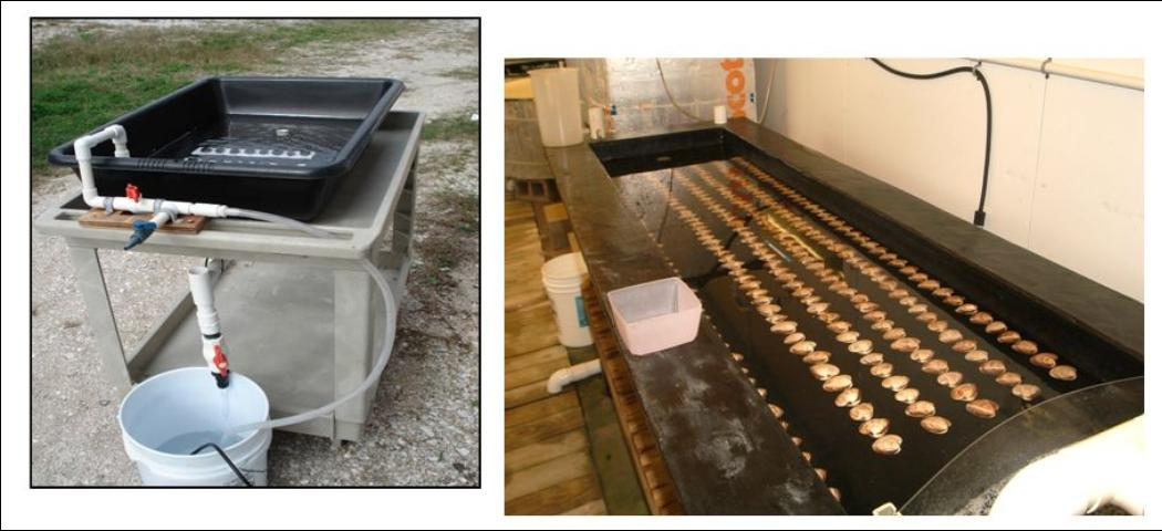 Figure 2.Two different examples of spawning tables with black background, intake line, and bucket to collect eggs.