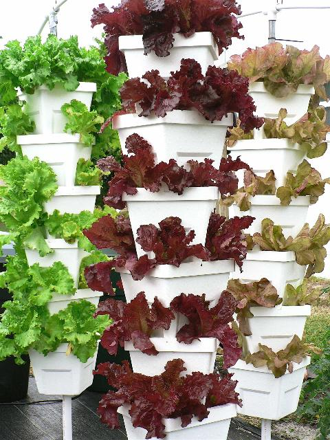 Figure 4.Vertical tower method of lettuce production
