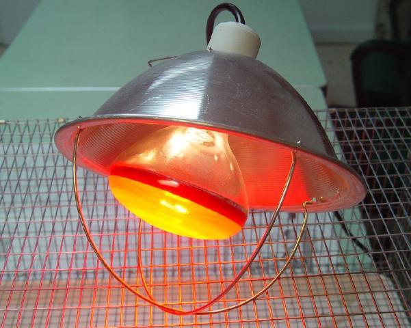 Figure 2.Heat lamp.