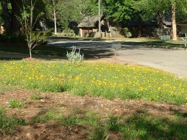 Figure 2.A small meadow-like planting (