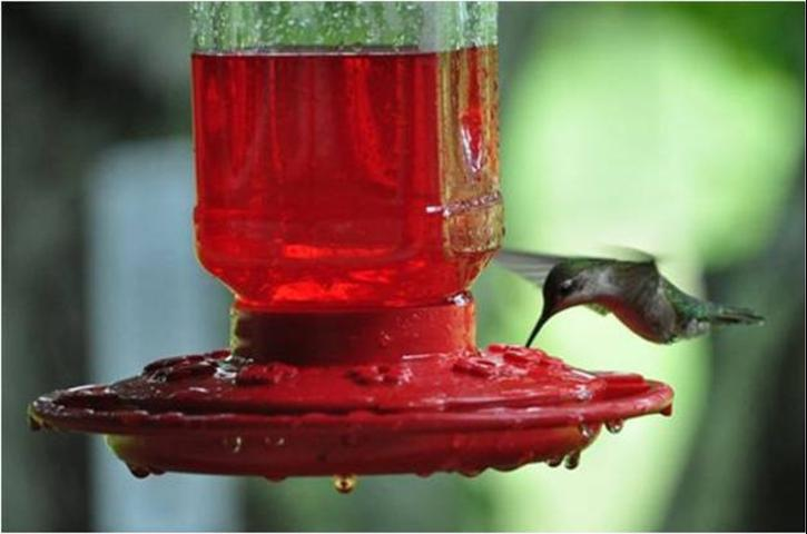 Figure 6.Nectar feeders come in a variety of shapes and sizes, but most feature plenty of red, since this is a very attractive color to hummingbirds.