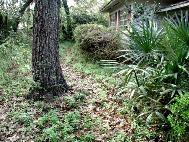 Figure 3.Ground covers provide habitat for a variety of wildife species, and they are easier to maintain than lawns.