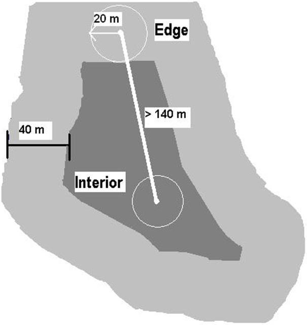 Figure 1.Illustration of edge and interior areas within a forest remnant in Gainesville, Florida. Edge was defined as the habitat less than 40 meters from the remnant boundary. Interior was defined as all habitat more than 40 meters from the remnant boundary. The circles represent point count surveys that were done for birds in the forest remnant. (Illustration Credit: Dan Dawson)