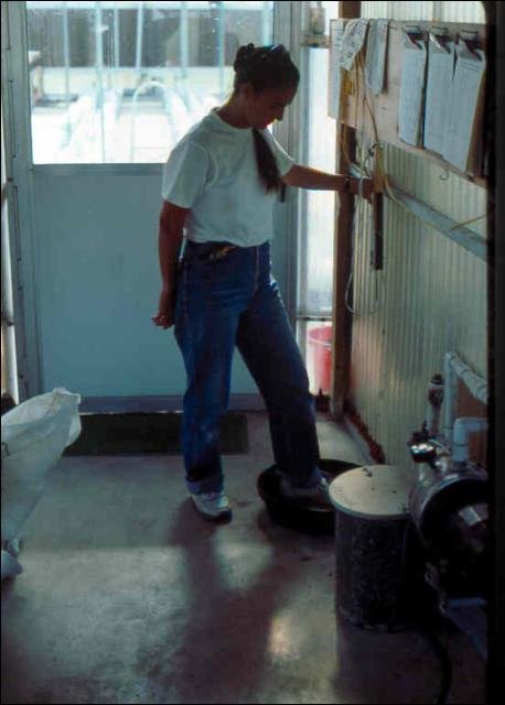 Figure 29.Foot bath to sanitize shoes prior to greenhouse entry.