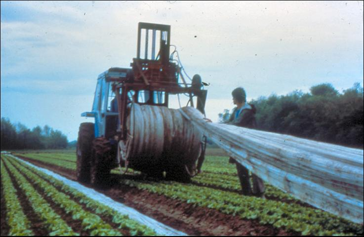 Figure 22.Floating row covers being mechancially retrieved from the field.