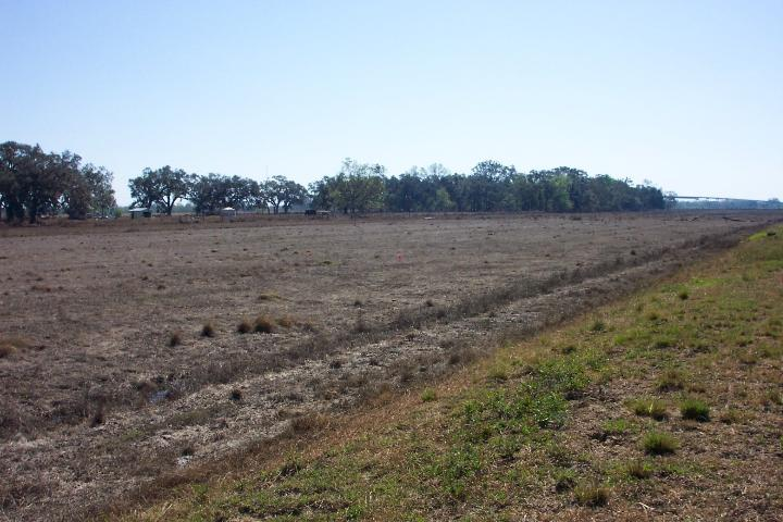 Figure 2. Damage to perennial pasture due to saltwater intrusion immediately following Hurricane Rita in late September of 2005.