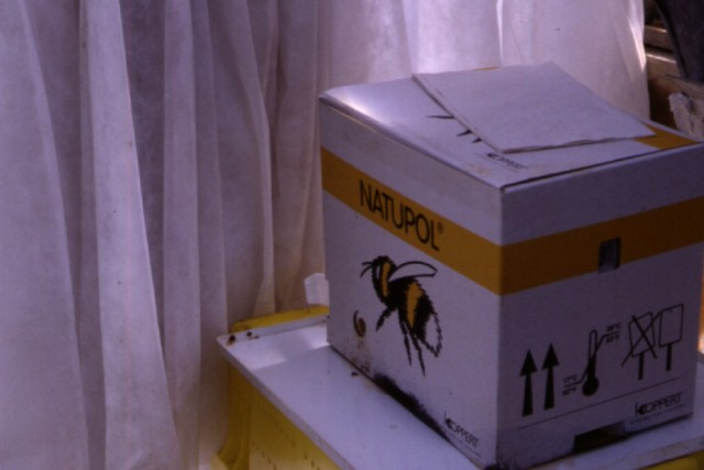 Figure 14.Bumble bee hive used for tomato pollination.