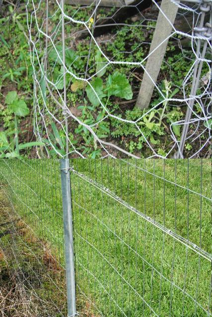 Figure 5.Chicken wire or thicker-gauge mesh can prevent access to valuable plants.