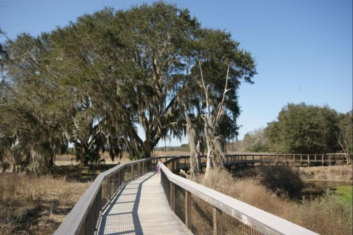 Figure 1.A large live oak tree with a raised boardwalk constructed nearby.