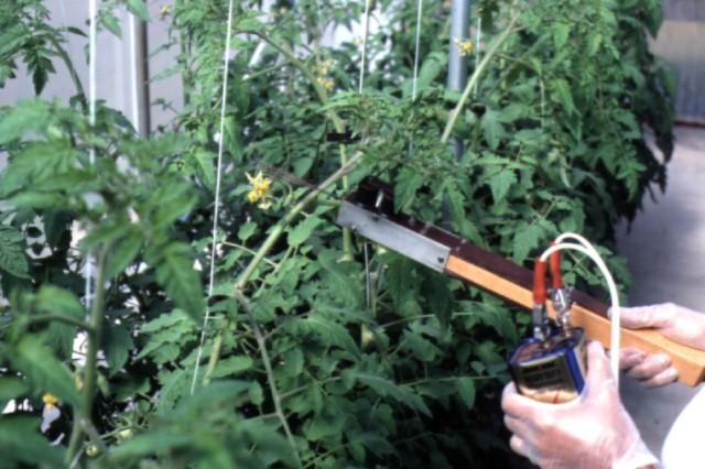 Figure 13.Pollination vibrator used to pollinate tomatoes.