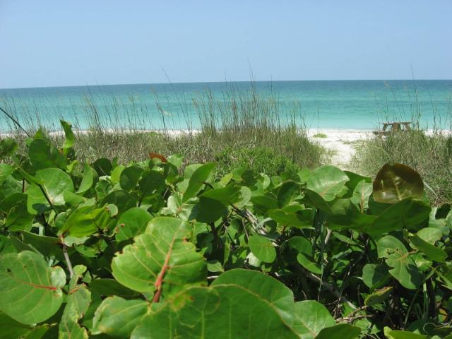 Figure 1.Coastal dunes and beach protected by the Conservation Foundation of the Gulf Coast in Florida.