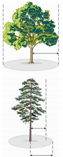 Figure 2.The top illustration demonstrates where the fence should be placed to protect the dripline for trees with wide crowns. For the bottom illustration, tall trees require a tree protection zone that is 1.5 times the dripline radius. Both techniques protect approximately 50% of the root zone.