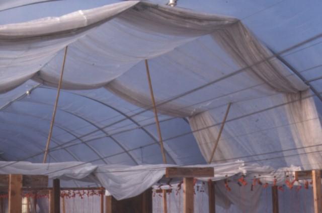 Figure 31.Greenhouse ceiling contour shade cloth system.