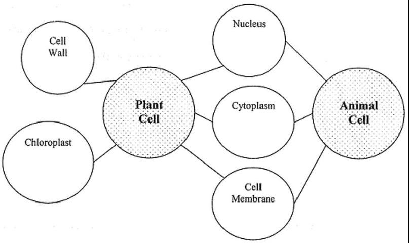 Figure 1. Example compare/contrast concept map of plant and animal cells
