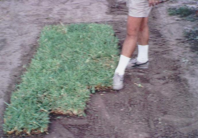 Figure 1. Sodding produces an instant ground cover. Lay sod pieces in a staggered pattern so that the seams are offset between pieces.