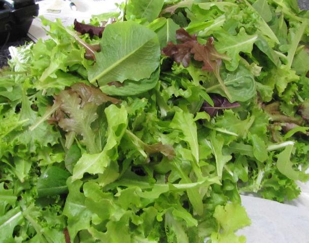 Figure 10.Baby lettuce blend