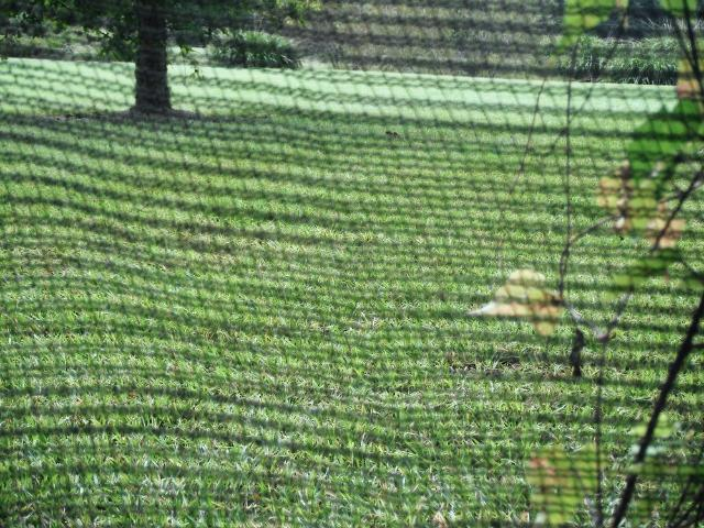 Figure 1.Flexible netting can protect vulnerable plants from foraging birds.