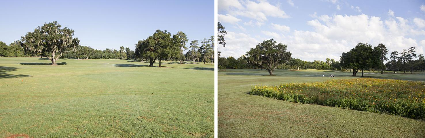 Figure 1.Before (left) (September 2016) and after (right) (May 2017) photos of a native wildflower mixture planted in an out-of-play area of bermudagrass alongside a golf course tee and fairway. Location: Mark Bostick Golf Course, Gainesville, FL.