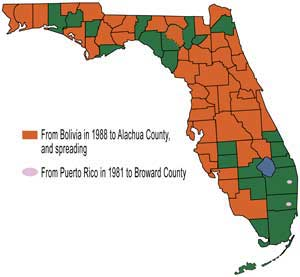Figure 16.Distribution of larra wasp in Florida.