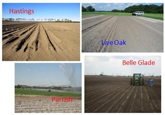 Figure 2.Sanyd soils in Hastings (northeast FL), Live Oak (north FL). Parrish (southwest FL), and Belle Glade (south FL).