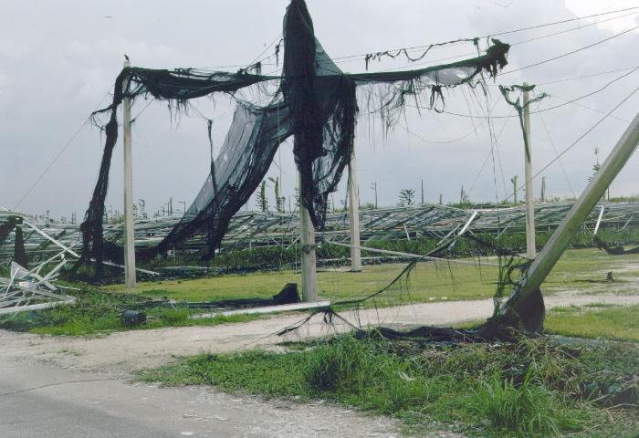 Figure 1. In 1992, Hurricane Andrew caused massive devastation to the nursery industry.