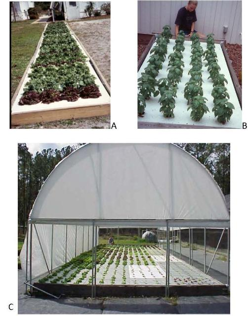 Figure 5.Floating raft hydroponic systems in Sanford, FL, 2007.