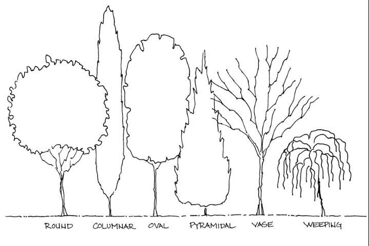 الشكل 6. أشكال شجرة.