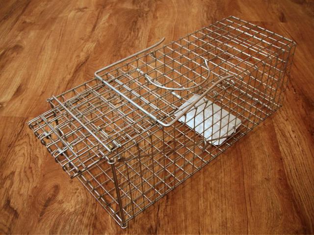 Figure 1.Wire cage trap.