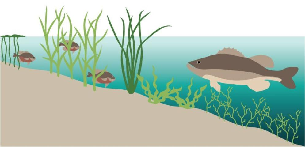 Figure 8.Aquatic vegitation