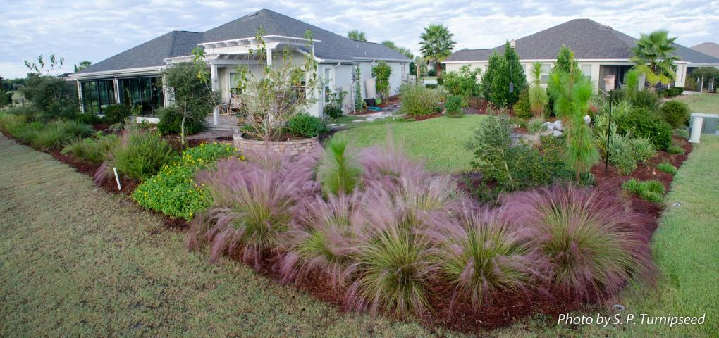 Figure 13.The same yard with a Florida-Friendly landscape with a variety of plants and a small turf area.