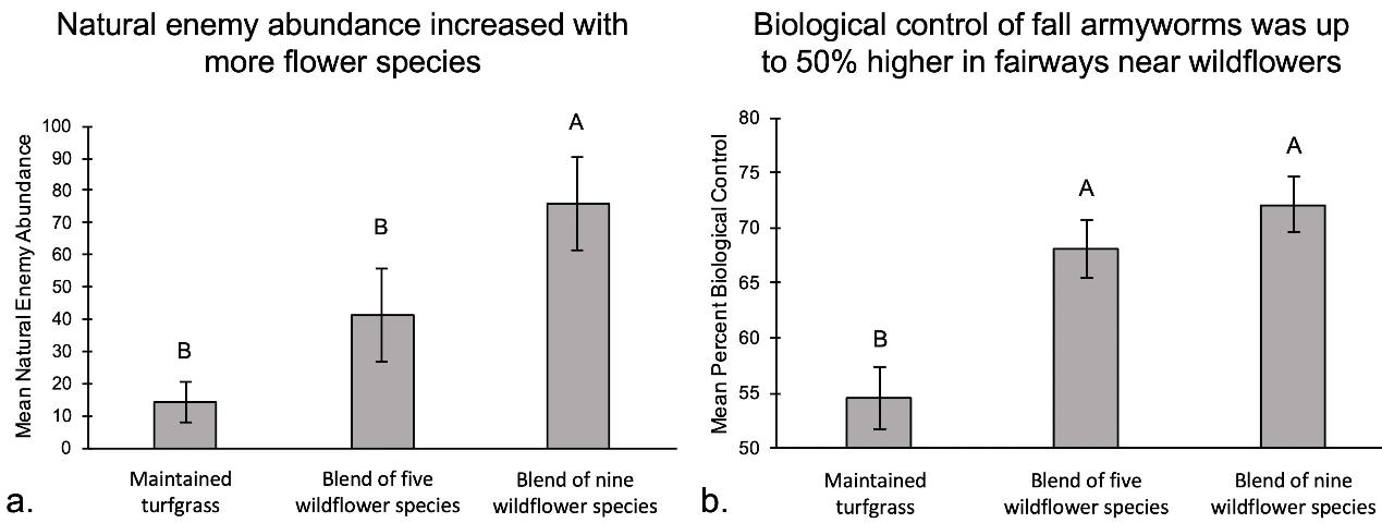 Figure 4.(a) Average abundance of parasitic and predatory insects collected in out-of-play turfgrass and wildflower plots from May through September. (b) Percentage of fall armyworms in golf course fairways adjacent to out-of-play turf and wildflower plots controlled by predatory insects.