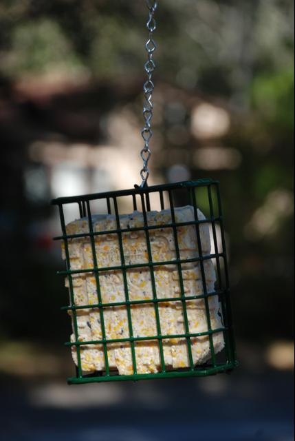 Figure 4.Suet feeders are generally a wire cage sized to hold a suet cake.