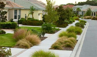 Figure 15.The common area between street and sidewalk with Florida-Friendly grasses.
