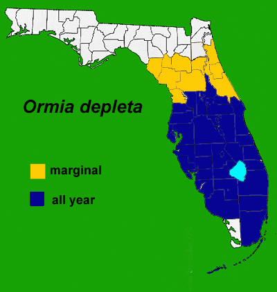Figure 17.Distribution of Brazilian red-eyed fly in Florida.