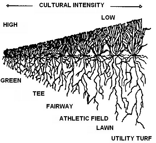 Figure 2.Relative size of turf resulting from different cultural intensity.