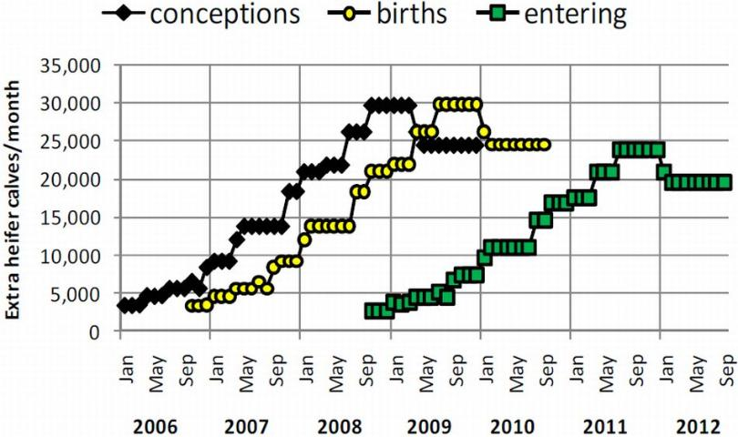 Figure 4. Number of extra heifer calves in the national population (heifers and cows) that resulted from inseminations (conceptions) with sexed semen from January 2006 to December 2009. These heifer calves are born (births) 9 months after conception and enter herds 24 months after they are born (entering).