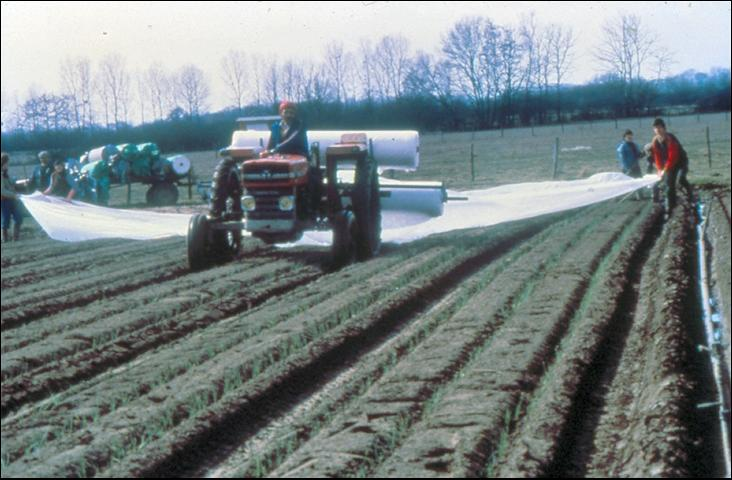 Figure 18.Mechanical-assist application of a wide row cover.