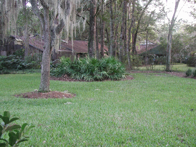 Figure 4.Replacing some lawn grass with islands of vegetation is beneficial to birds and small animals, and to you—if you are the one who mows the lawn!
