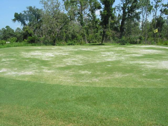 Figure 7. Sting nematode damage to a golf green.