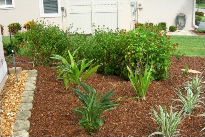 Figure 7.AFTER Florida-Friendly landscape renovation -- June 2009. The overgrown plants and some of the sod were replaced with a greater variety of plants. The newly installed plants require a thick mulch layer to reduce moisture loss and prevent weeds. These plants will grow quickly and cover the mulch and foundation gravel.