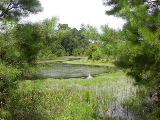 Figure 3.An enhanced stormwater basin used to treat runoff.