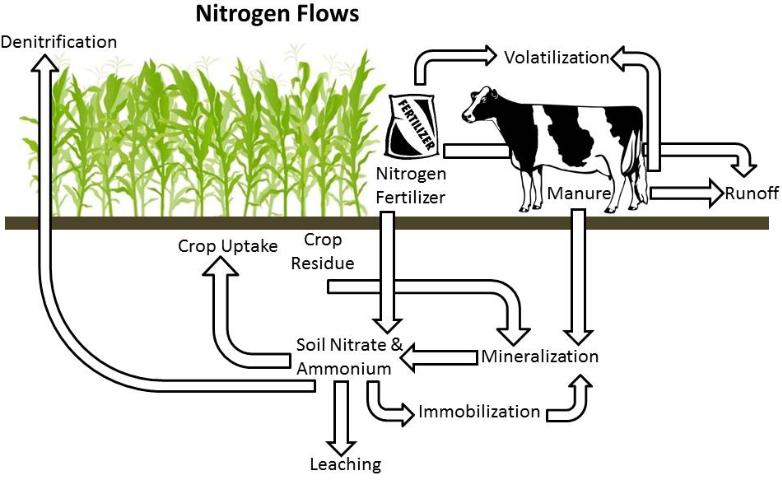 Figure 1.Nitrogen flows of a dairy forage system.
