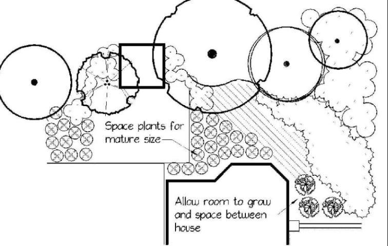 Figure 14.Plant spacing.