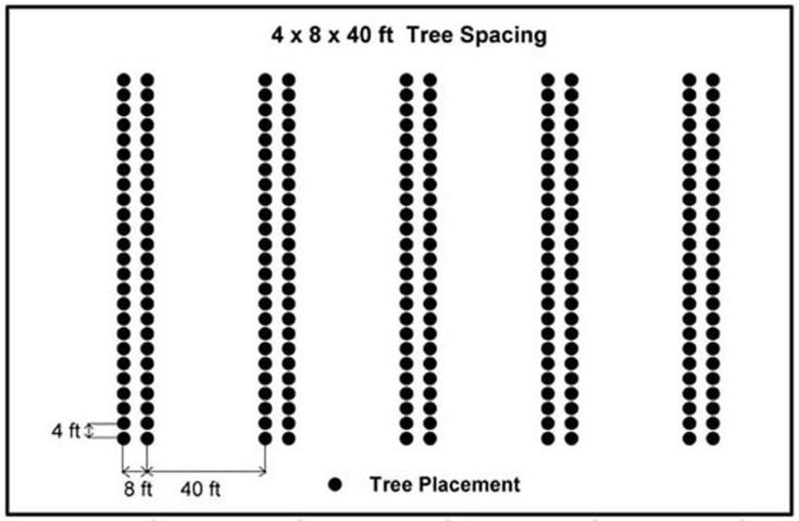 Figure 1. Double-row 4x8 ft tree spacing with 40 ft wide alleys between pairs of tree rows (also known as 4x8x40 ft spacing) was found to satisfy both timber and forage growth requirements (Lewis et al. 1985).