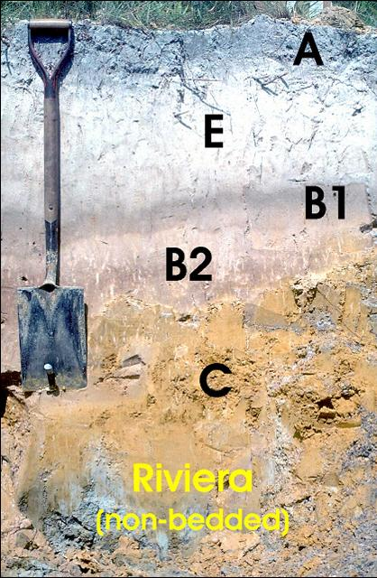 Figure 2.Profile horizons in a typical undisturbed Riviera series soil.