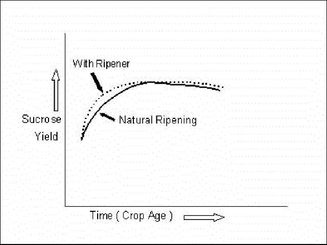 Figure 1. Theoretical ripener effect on sucrose yield.